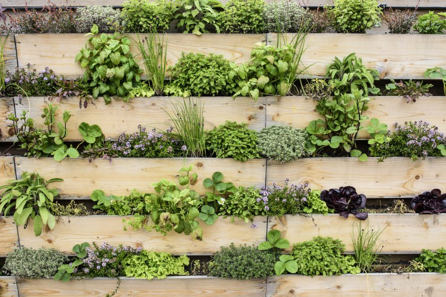 Detail of vertical garden with eatable herbs and vegetables